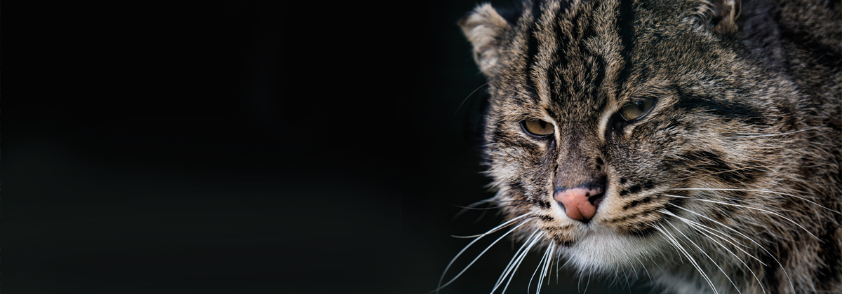 Image for Roaring Success For The Big Cat Sanctuary, Smarden