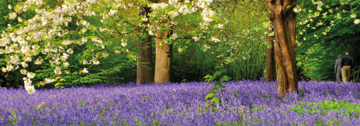 Image for Hole Park Gardens Rolvenden Set For Bluebell Spectacular